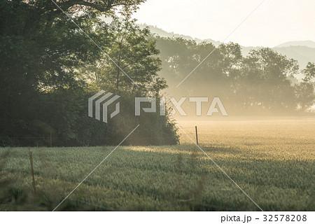 夏の畑の朝1 32578208
