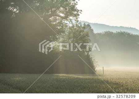夏の畑の朝2 32578209