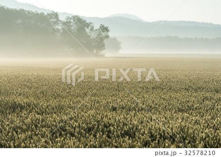 夏の畑の朝3 32578210