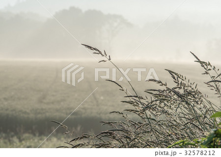 夏の畑の朝5 32578212
