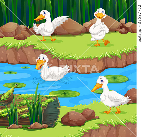 Four ducks in the river 32587752