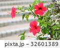 ハイビスカスの花 32601389
