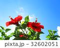 ハイビスカス 夏 花の写真 32602051