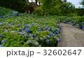 紫陽花寺 32602647