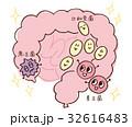 腸内 腸 菌のイラスト 32616483
