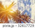 椰子の木 空 日光の写真 32617729
