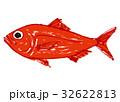 金目鯛 水彩画 魚のイラスト 32622813