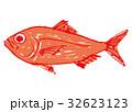 金目鯛 水彩画 魚のイラスト 32623123