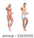 筋肉 人体 解剖のイラスト 32626592