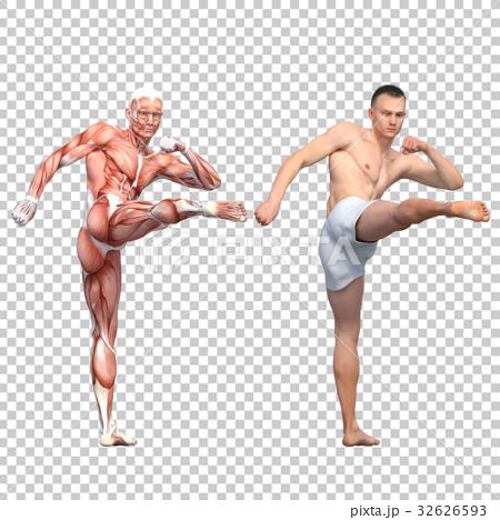 男性 解剖 筋肉 3DCG イラスト素材 32626593