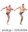男性 解剖 筋肉 3DCG イラスト素材 32626594
