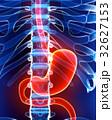 3D illustration of Stomach. 32627153