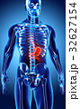 3D illustration of Stomach. 32627154