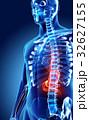 3D illustration of Stomach. 32627155