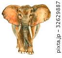 ぞう ゾウ 象のイラスト 32629887