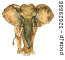 ぞう ゾウ 象のイラスト 32629888