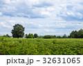 樹木 樹 ツリーの写真 32631065