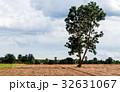樹木 樹 ツリーの写真 32631067