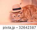 帽子猫 32642387