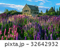 Church of the Good Shepherd and Lupine Field, Lake Tekapo 32642932