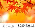 紅葉 もみじ 秋の写真 32643918