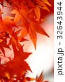 紅葉 もみじ 秋の写真 32643944