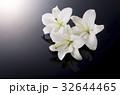 白百合 花 ゆりの写真 32644465