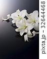 白百合 花 ゆりの写真 32644468