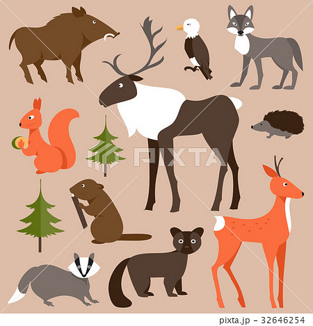Set of forest animals. Vector Illustration 32646254