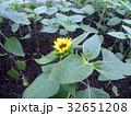 色々な花の咲くヒマワリモネパレットの黄色い花 32651208