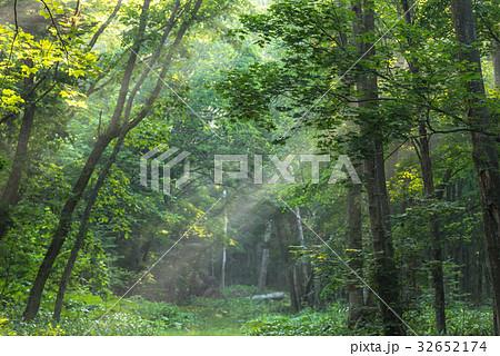 涼しい朝の森の光1 32652174