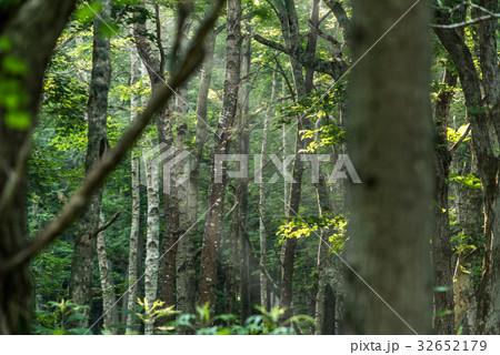 涼しい朝の森の光3 32652179