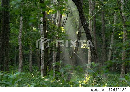 涼しい朝の森の光4 32652182