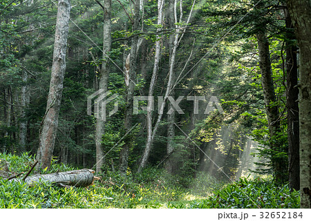 涼しい朝の森の光5 32652184