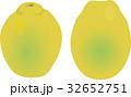 かりん 花梨 果物のイラスト 32652751