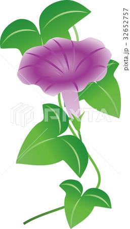 紫の朝顔 32652757