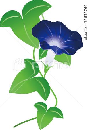 青い朝顔 32652760