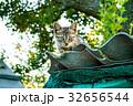 ねこ ネコ 猫の写真 32656544