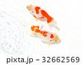 出雲なんきん〜島根県出雲地方で飼育されてきた金魚 32662569