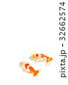 観賞魚 淡水魚 魚の写真 32662574