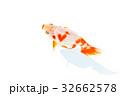 観賞魚 淡水魚 魚の写真 32662578