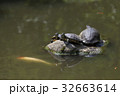 亀の住む池 32663614