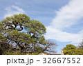 多聞寺の松の木 32667552