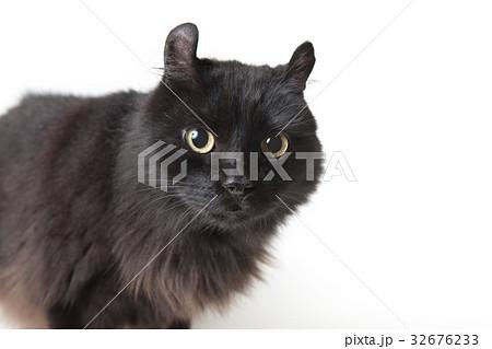黒猫 32676233