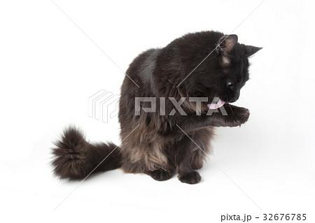 黒猫 32676785