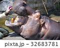 天王寺動物園のカバ 32683781