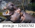 天王寺動物園のカバ 32683782