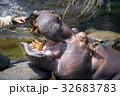 天王寺動物園のカバ 32683783