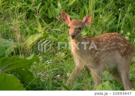 バンビの冒険1 32693647