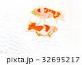出雲なんきん〜島根県出雲地方で飼育されてきた金魚 32695217